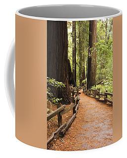 Muir Woods Trail Coffee Mug