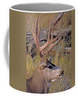 Coffee Mug featuring the photograph Mule Deer by Lynn Sprowl