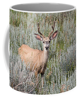 Coffee Mug featuring the photograph Mule Deer by Michael Chatt