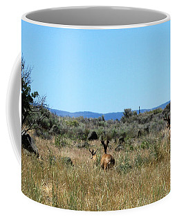 Coffee Mug featuring the photograph Muledeer Bucks In Action by Jennifer Muller