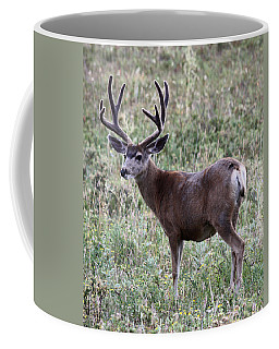 Muley Buck Coffee Mug
