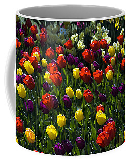 Multicolored Tulips At Tulip Festival. Coffee Mug