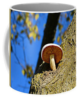 Coffee Mug featuring the photograph Mushroom In A Tree by Ally  White