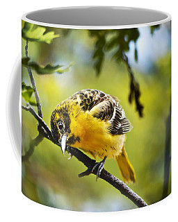 Musing Baltimore Oriole Coffee Mug