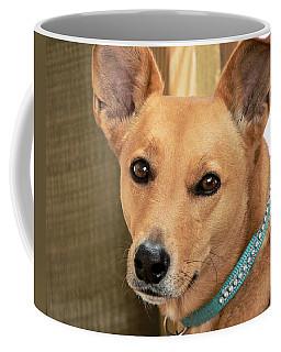 Dog - Cookie One Coffee Mug