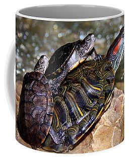 My Three Turtles Coffee Mug by Jennifer Muller