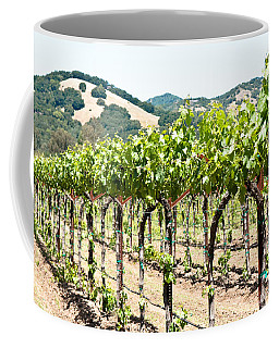 Napa Vineyard Grapes Coffee Mug