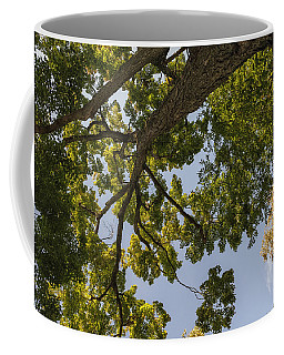 Nature Westchester County Ny Coffee Mug by Marianne Campolongo