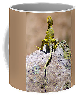 New Photographic Art Print For Sale Lizard Back Ghost Ranch New Mexico Coffee Mug