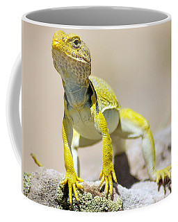 New Photographic Art Print For Sale Yellow Lizard Ghost Ranch New Mexico Coffee Mug