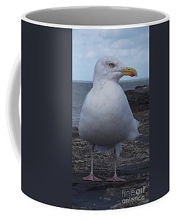 New Quay Gull  Coffee Mug