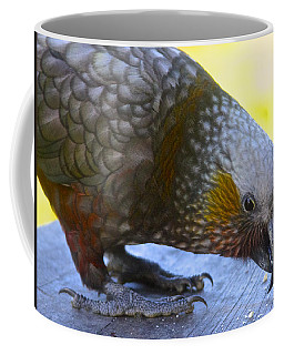 New Zealand Kaka Happy Hour Coffee Mug by Venetia Featherstone-Witty
