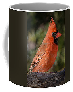 Northern Cardinal 2 Coffee Mug