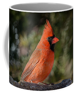Northern Cardinal Coffee Mug by Kenneth Cole