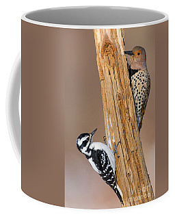 Northern Flicker And Hairy Woodpecker Coffee Mug