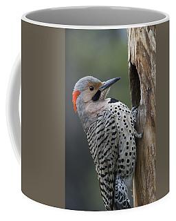 Northern Flicker At Nest Cavity Alaska Coffee Mug