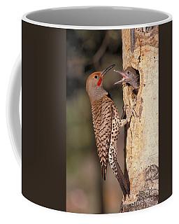 Northern Flicker At Nest Coffee Mug