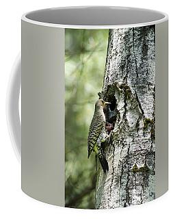 Northern Flicker Nest Coffee Mug