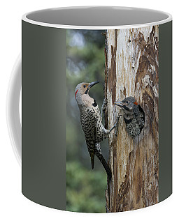 Northern Flicker Parent At Nest Cavity Coffee Mug