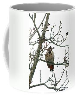 Northern Flicker Woodpecker Coffee Mug