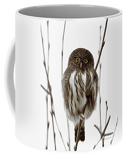 Northern Pygmy Owl - Little One Coffee Mug