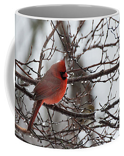 Coffee Mug featuring the photograph Northern Red Cardinal In Winter by Jeff Folger