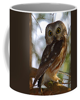 Northern Saw-whet Owl II Coffee Mug