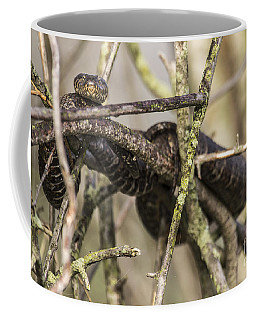Coffee Mug featuring the photograph Northern Water Snake by Jeannette Hunt