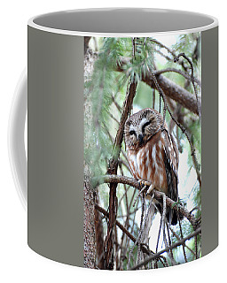 Northern Saw-whet Owl 2 Coffee Mug