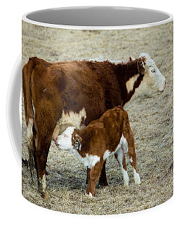 Coffee Mug featuring the photograph Nursing Calf by Michael Chatt