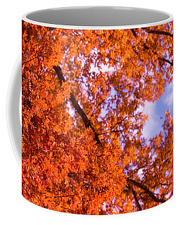 Coffee Mug featuring the photograph Oak In Evening Sun by Denise Beverly