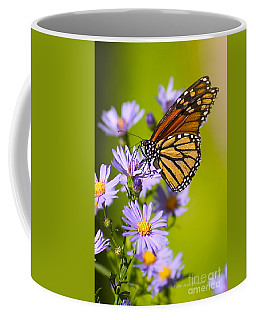 Old Butterfly On Aster Flower Coffee Mug