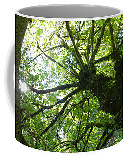 Old Growth Tree In Forest Coffee Mug