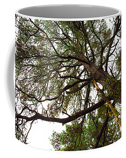 Old Pine Coffee Mug