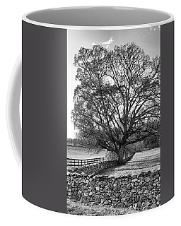 Coffee Mug featuring the photograph Old Tree In Black And White by John S