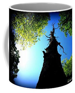 Old Trees Coffee Mug