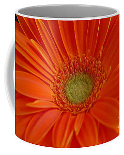 Orange Gerber Daisy Coffee Mug by Patrick Shupert