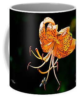 Orange Lily - Lilium Kelleyanum Coffee Mug