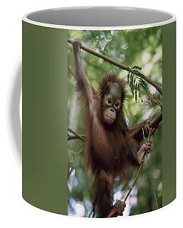 Orangutan Infant Hanging Borneo Coffee Mug