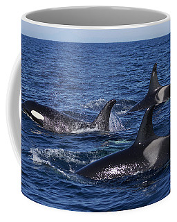 Orca Pod Surfacing Off Hokkaido  Coffee Mug