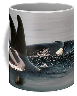Coffee Mug featuring the photograph Orcas/killer Whales Off The San Juan Islands 1986 by California Views Mr Pat Hathaway Archives