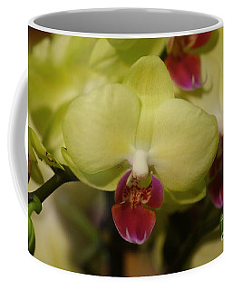 Orchids 181 Coffee Mug