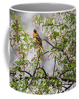 Oriole In Crabapple Tree Coffee Mug