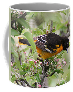 Oriole With Apple Blossoms Coffee Mug