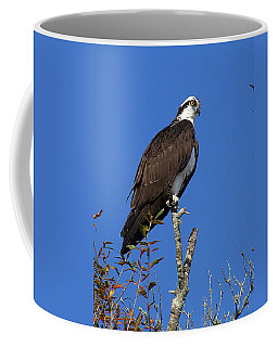 Osprey 109 Coffee Mug