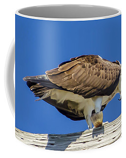 Coffee Mug featuring the photograph Osprey Eating Lunch by Dale Powell