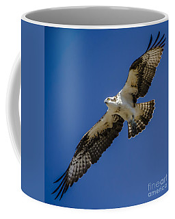 Coffee Mug featuring the photograph Osprey In Flight by Dale Powell