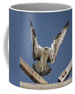 Coffee Mug featuring the photograph Osprey Landing by Dale Powell