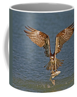 Osprey Morning Catch Coffee Mug by Susan Candelario