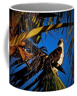 Osprey Paradise Coffee Mug